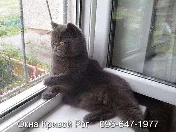 Этот котик понимает толк в качественных окнах