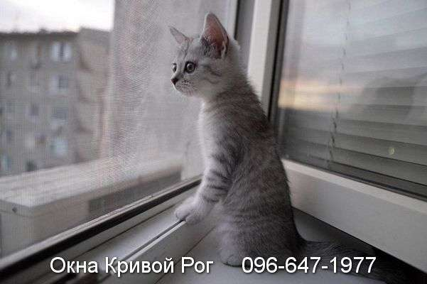okna krivoy rog (17)