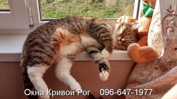 Коты знают толк в настоящей продукции
